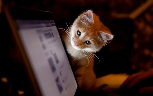 6 tumblr.com  I mace vole internet