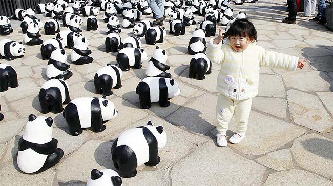 7 Ovo je tako kul: Izložba posvećena pandama