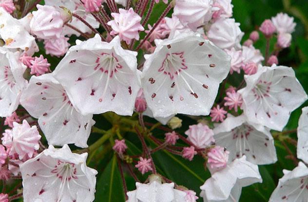 0121 Verovali ili ne: Cveće koje ubija