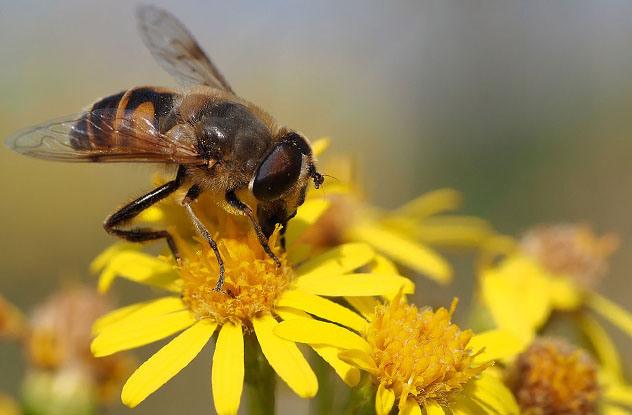 0223 Verovali ili ne: Cveće koje ubija