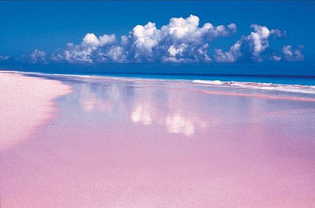 02 Roza priroda Doza nauke i kulture: Priroda u nijansama ružičaste boje