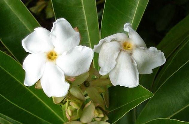 0718 Verovali ili ne: Cveće koje ubija