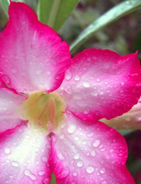 Verovali ili ne: Cveće koje ubija