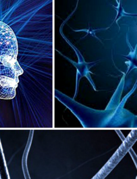 Doza nauke i kulture: Mit ili istina – fenomen ćelijskog pamćenja