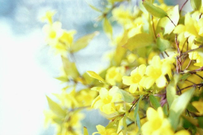 Jasmin Brini o sebi: A kao aromaterapija (1/3)