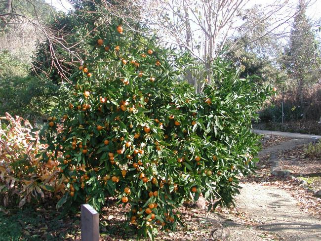 Mandarina Brini o sebi: A kao aromaterapija (2/3)