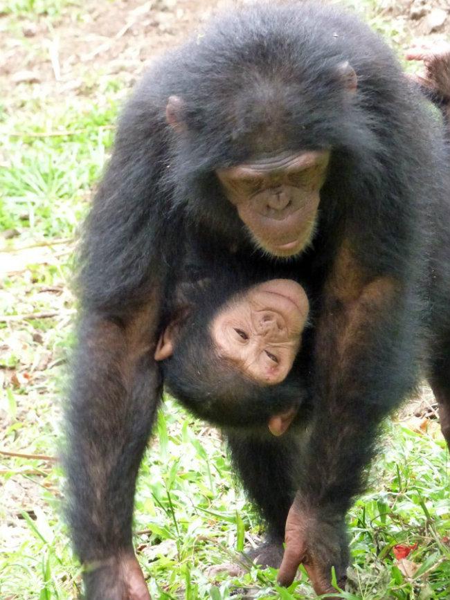 980x Slatka stvorenja: Bebe životinja