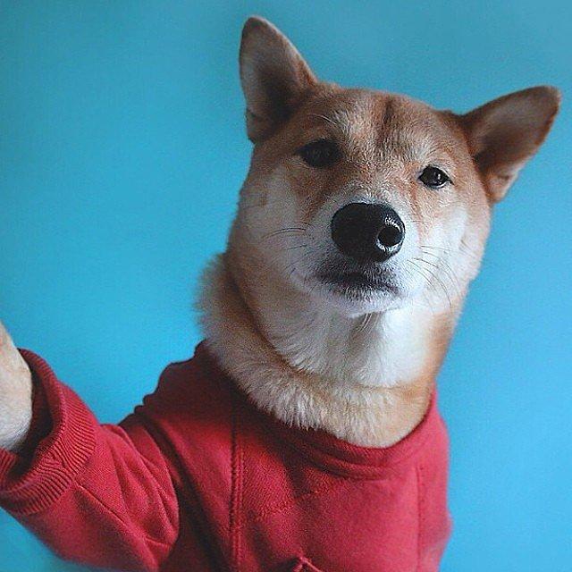 All Dressed Up Nowhere Go Selfie manija: Kad bi životinje pravile selfije