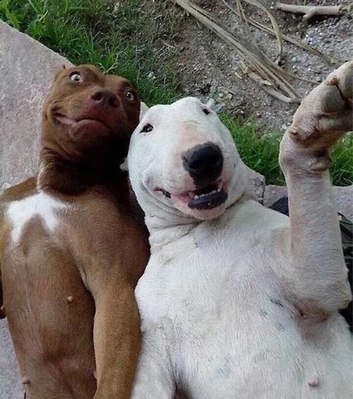 Besties Selfie manija: Kad bi životinje pravile selfije