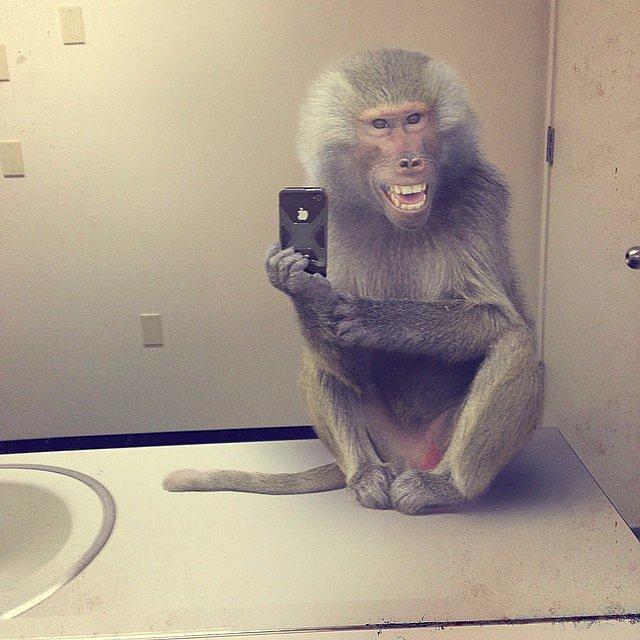 Hehe Selfie manija: Kad bi životinje pravile selfije