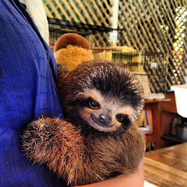 Hug Sloth Costa Rica Put pod noge: Neobična iskustva sa putovanja