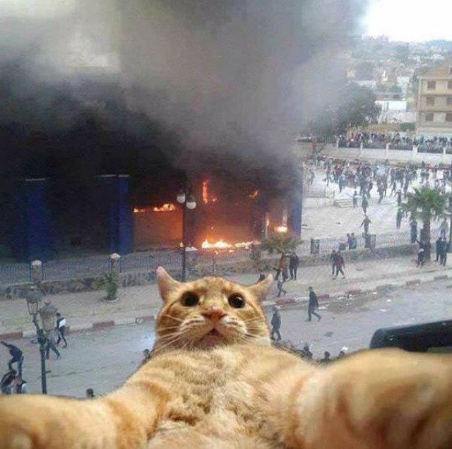 I See Fire Trucks First Selfie Selfie manija: Kad bi životinje pravile selfije