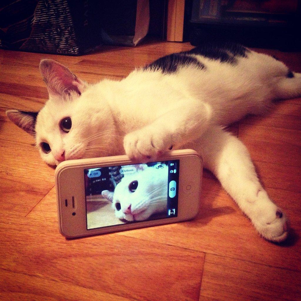 Lazy Dayz Selfie manija: Kad bi životinje pravile selfije