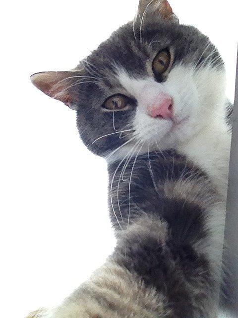 NoFilter Selfie manija: Kad bi životinje pravile selfije