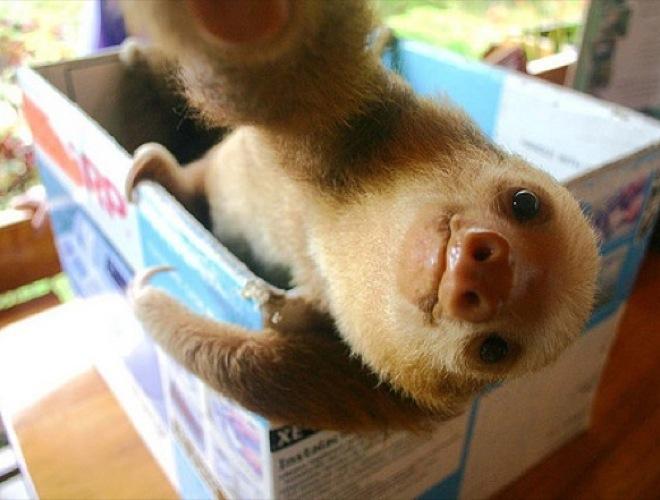 blog yummypets selfie paresseux 09 01 14 Selfie manija: Kad bi životinje pravile selfije