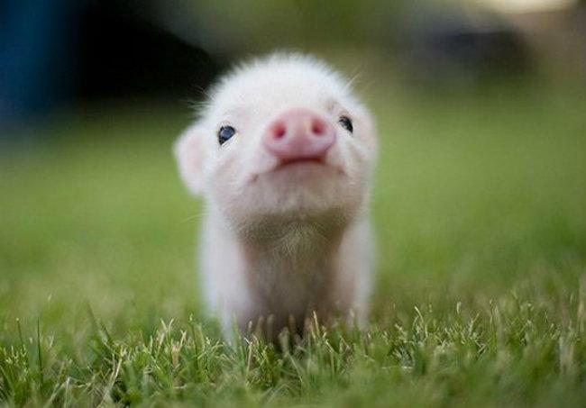 cute baby animals 10 Slatka stvorenja: Bebe životinja