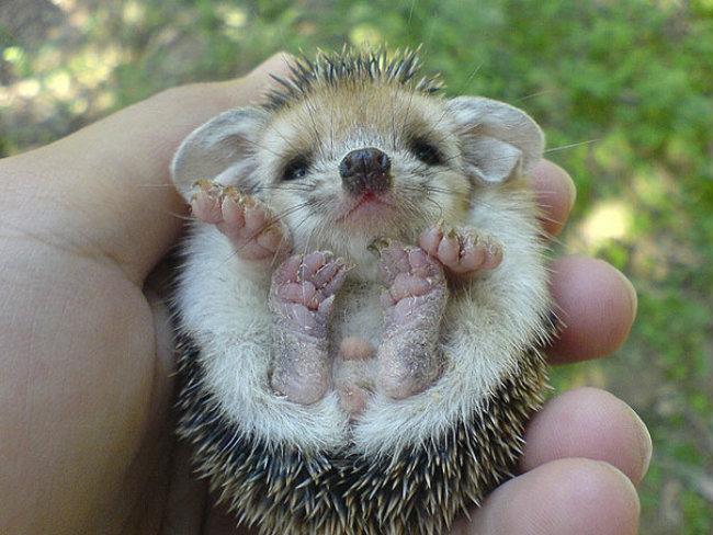 cute baby animals 13 Slatka stvorenja: Bebe životinja