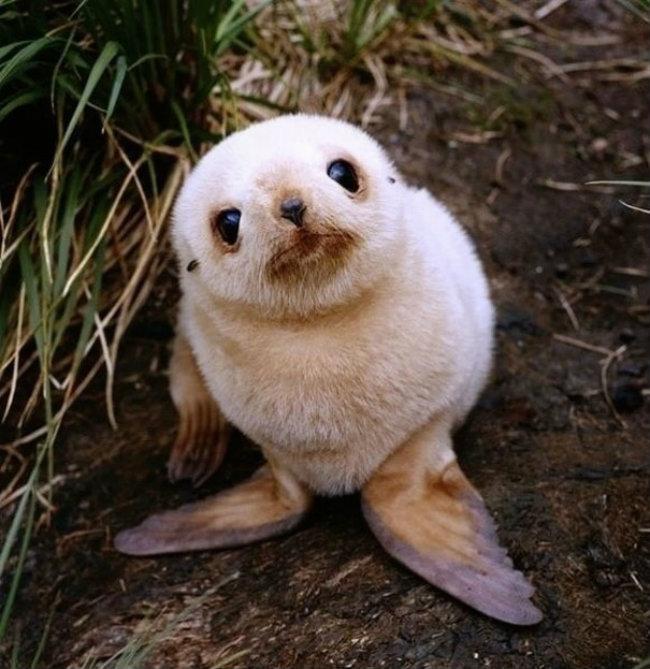 cute baby animals 17 Slatka stvorenja: Bebe životinja