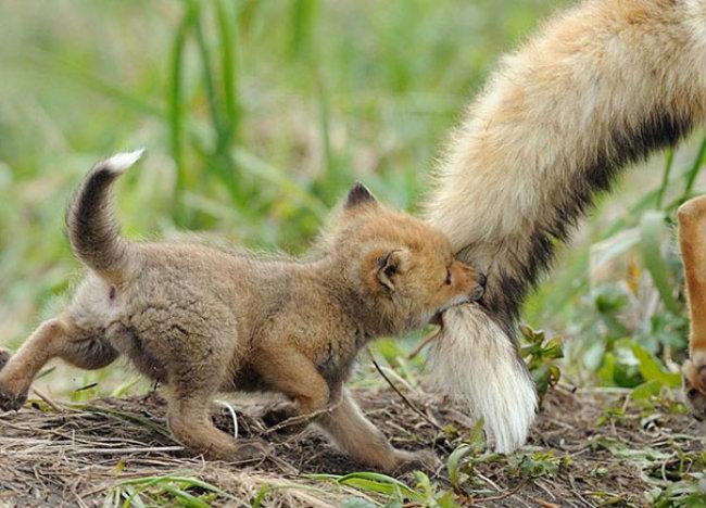 cute baby animals 18 Slatka stvorenja: Bebe životinja