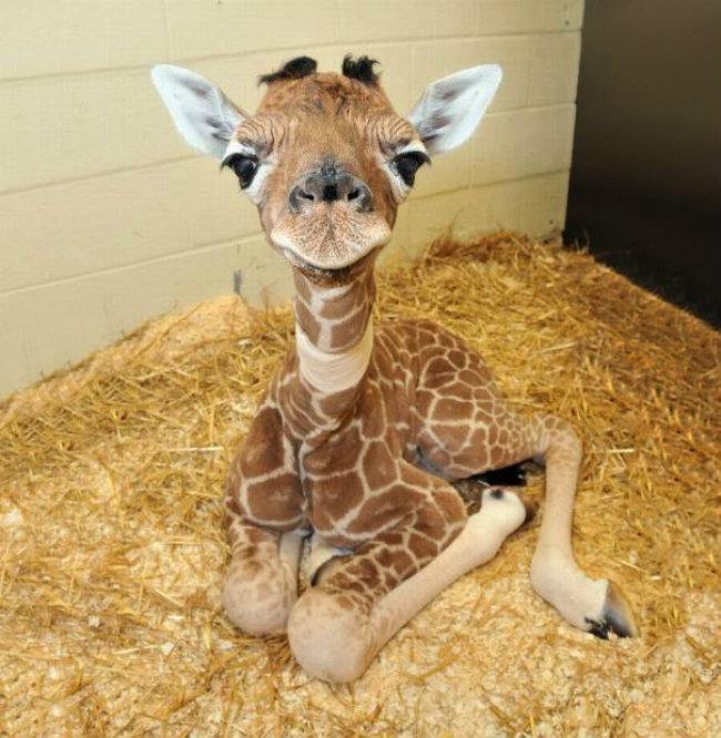 cute baby animals 2 Slatka stvorenja: Bebe životinja