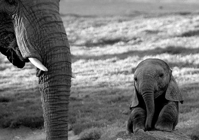cute baby animals 33 Slatka stvorenja: Bebe životinja