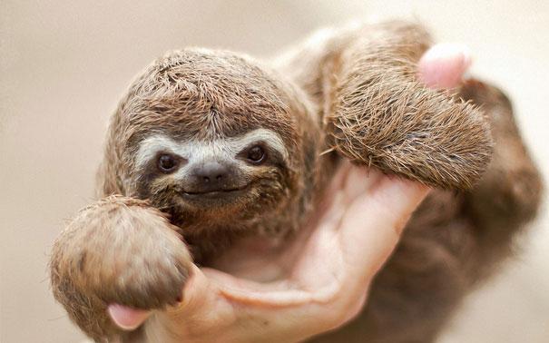 cute baby animals 34 Slatka stvorenja: Bebe životinja
