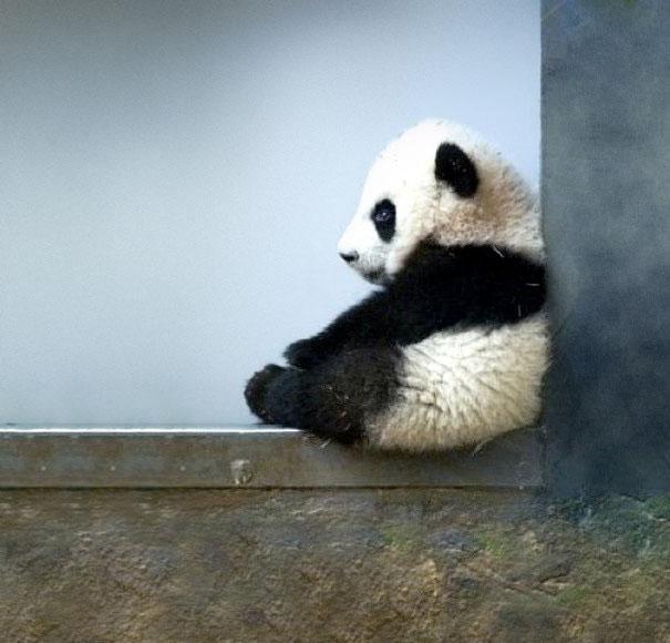 cute baby animals 36 Slatka stvorenja: Bebe životinja
