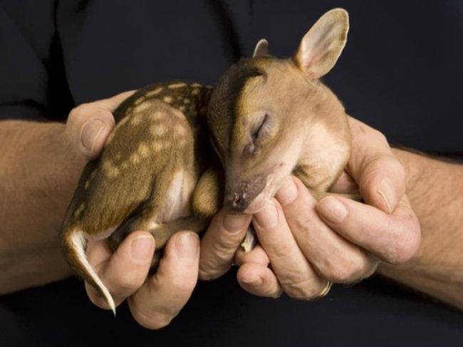 cute baby animals 7 Slatka stvorenja: Bebe životinja
