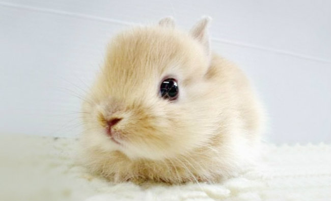 cute baby animals 9 Slatka stvorenja: Bebe životinja