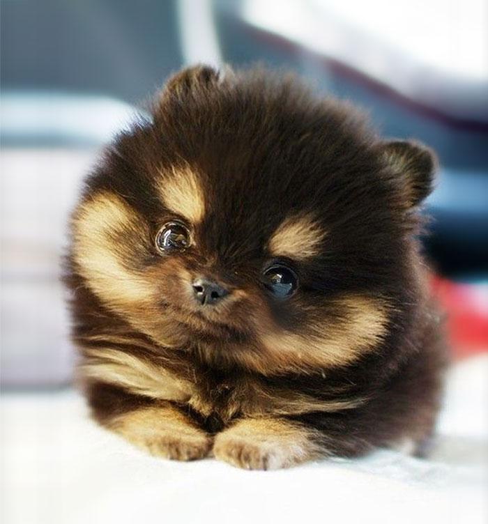 cute dog Slatka stvorenja: Neodoljivi psići