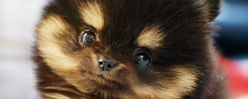 Slatka stvorenja: Neodoljivi psići