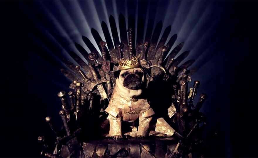cute pugs game of thrones pugs of westeros 5 Slatka stvorenja: Game of Thrones pugne