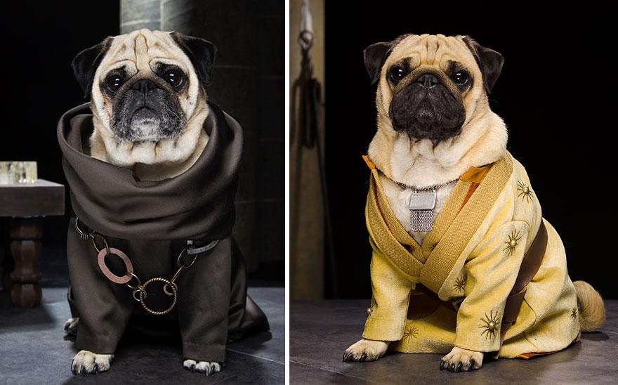 cute pugs game of thrones pugs of westeros 6 Slatka stvorenja: Game of Thrones pugne