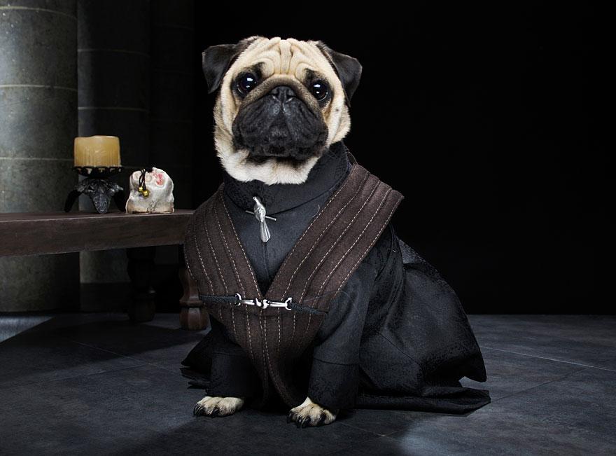 cute pugs game of thrones pugs of westeros 7 Slatka stvorenja: Game of Thrones pugne