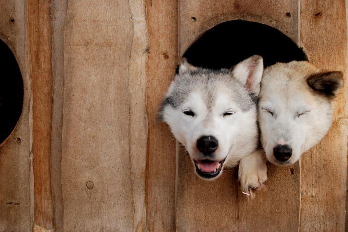 none2050  700 Slatka stvorenja: Neodoljivi psići