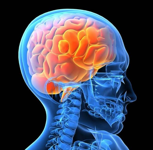 01 DNIK Zanimljice cinjenice o mozgu Doza nauke i kulture: Zanimljive činjenice o ljudskom mozgu