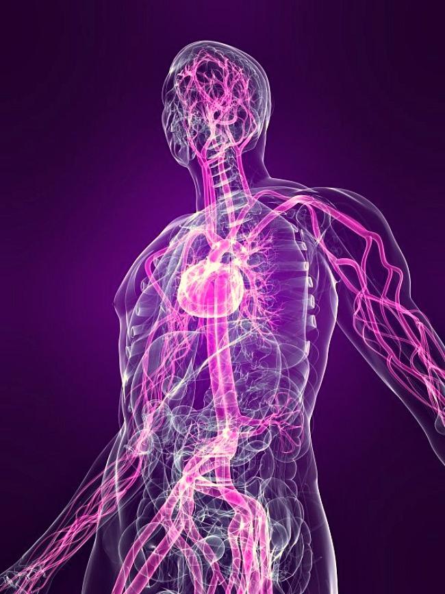 02 DNIK Cinjnice o ljudskom telu Doza nauke i kulture: Zanimljive činjenice o ljudskom telu