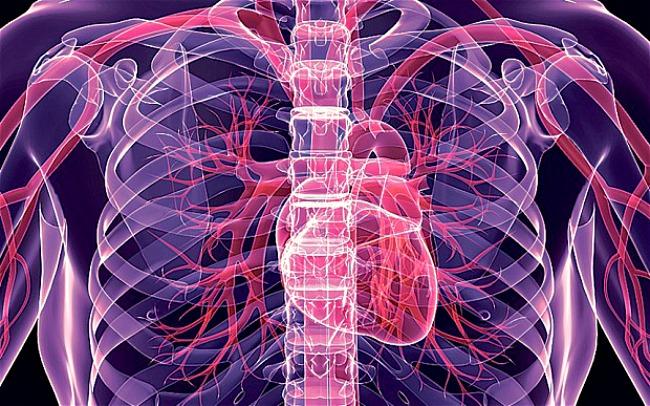 03 DNIK Cinjnice o ljudskom telu Doza nauke i kulture: Zanimljive činjenice o ljudskom telu