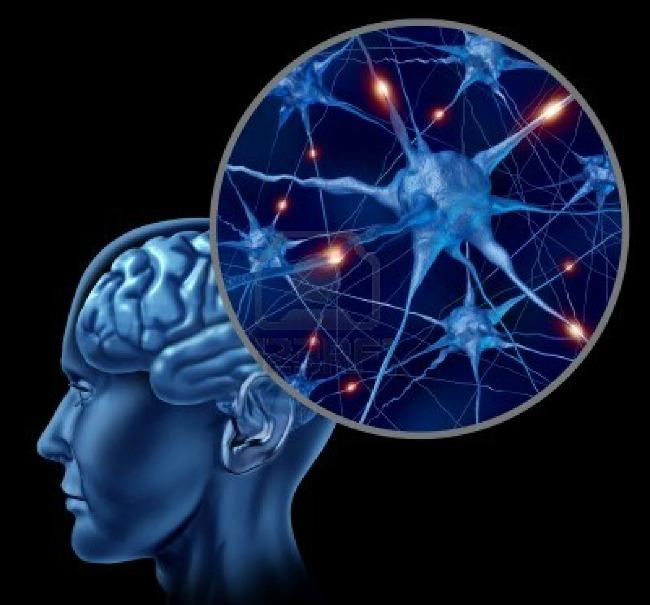 03 DNIK Zanimljice cinjenice o mozgu Doza nauke i kulture: Zanimljive činjenice o ljudskom mozgu
