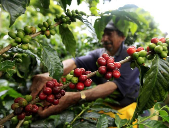 899 934x Čuj ovo: 10 neverovatnih činjenica koje niste znali o kafi