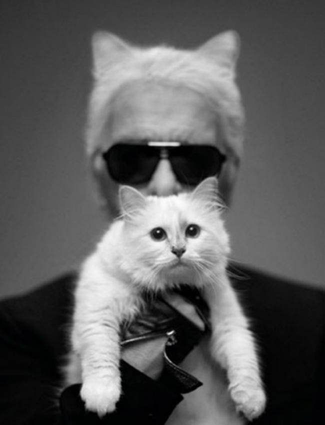 karlcat 2303406a Da li ste znali: Karl Lagerfeld posvetio knjigu svojoj mački!