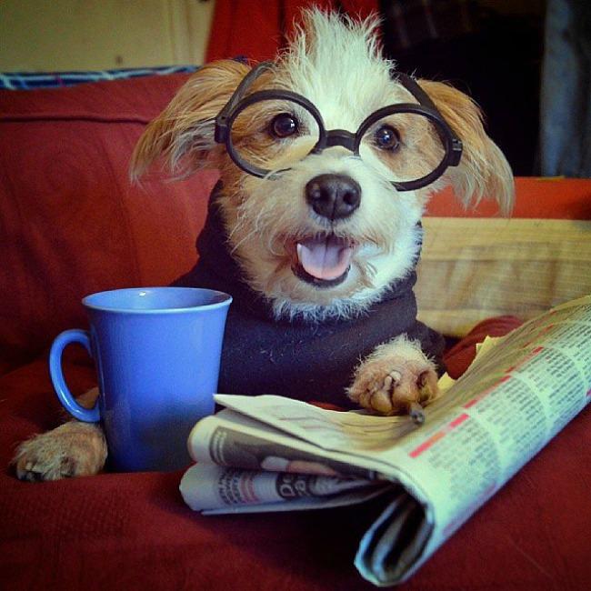 Dzini 1 Džini: Najsrećniji pas na Instagramu