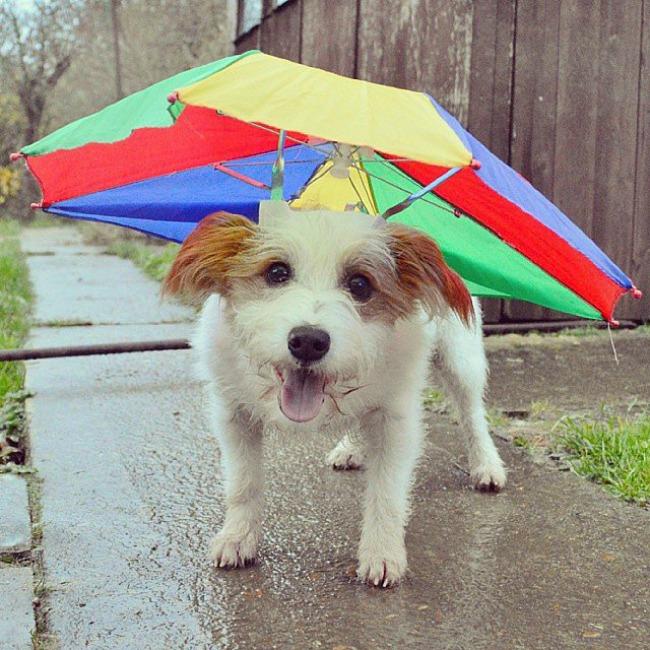 Dzini 2 Džini: Najsrećniji pas na Instagramu
