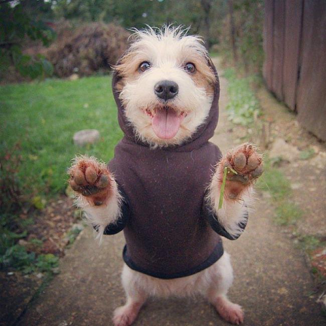 Dzini 3 Džini: Najsrećniji pas na Instagramu