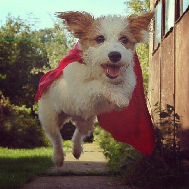 Dzini 4 Džini: Najsrećniji pas na Instagramu