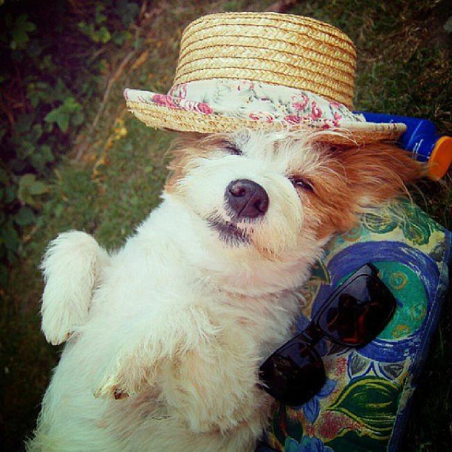 Dzini 5 Džini: Najsrećniji pas na Instagramu