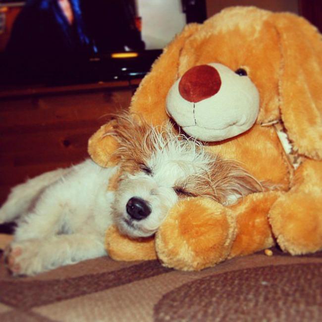 Dzini 6 Džini: Najsrećniji pas na Instagramu