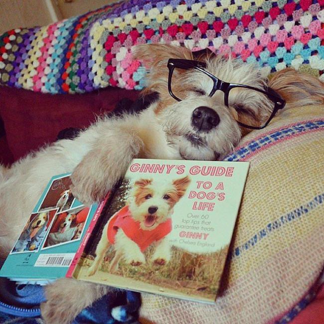 Dzini 8 Džini: Najsrećniji pas na Instagramu