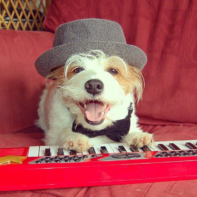 Dzini 9 Džini: Najsrećniji pas na Instagramu