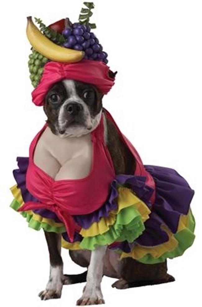 Kostimi za pse Spremni za maskenbal: Najluđi kostimi za pse